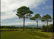 O Sonho das Três Árvores