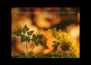 Inspiração... (Emmanuel - Chico Xavier)