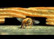 A Beleza da Polinização - Maravilhas da Natureza