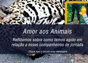 Amor aos Animais - Reflitamos sobre como temos agido em relação a esses companheiros de jornada
