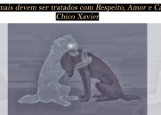 Os animais devem ser tratados com respeito, amor e carinho - Chico Xavier