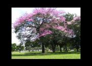 Árvore de Amigos