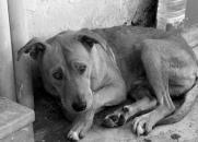 Quais as CONSEQUÊNCIAS ESPIRITUAIS para uma pessoa que MALTRATA e MATA um ANIMAL?
