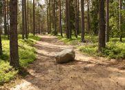 A Pedra no Caminho - História Infantil