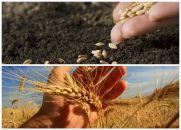 Toda semente pede tempo para germinar...