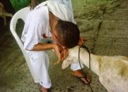 Sacrifício de Animais em Rituais Religiosos - Qual a visão espírita sobre essa prática?