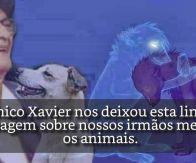 Reencarnação e Alma dos Animais por Chico Xavier