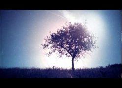 Sem medo de Viver... Reflexão Espírita