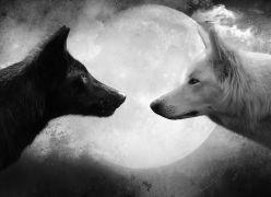 Lobos Internos...
