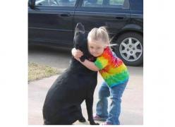 A cadela Abbey - Amor aos Animais