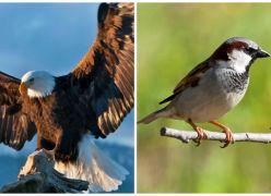 A Águia e o Pardal (Todos podemos voar como Águias)