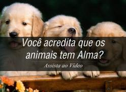 Você acredita que os animais tem Alma?
