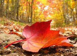 Por que as folhas caem?