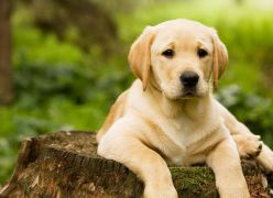 O Cão Menino - Chico Xavier
