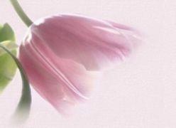 Uma Flor Rara (Cuide de sua Família)