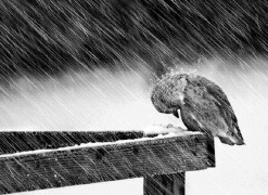 Seja qual for a provação que encontres, Silencia e espera, porque Deus e o Tempo tudo esclarecem, restabelecendo a verdade - Chico Xavier