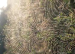 A aranha e a teia...
