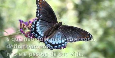 Jardim das Borboletas - Mario Quintana