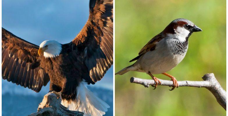 Mensagem Em Vídeo A águia E O Pardal Todos Podemos Voar