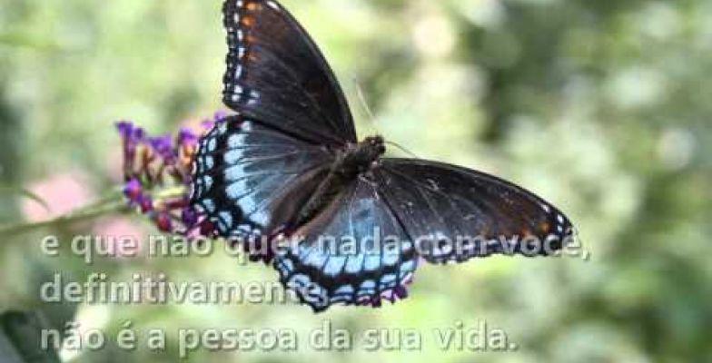 Mensagem Em Vídeo De Mário Quintana Jardim Das Borboletas