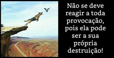 Não se deve reagir a toda provocação, pois ela pode ser a sua própria destruição!