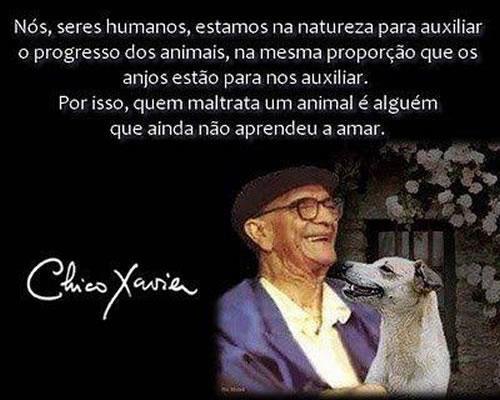 Mensagem De Chico Xavier Reencarnação E Alma Dos Animais Por Chico